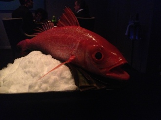 Snapper at Alinea (uncooked)